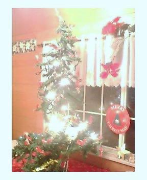 ウィットロック慶子自宅クリスマスツリー☆