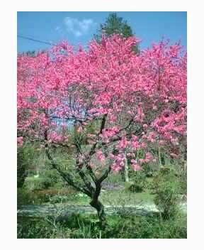 花の季節到来!アタクシの趣味はガー