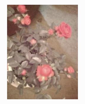 薔薇の季節到来☆