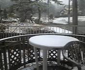 ぼるちゃん!散歩行こ!雪が積もってるよ♪
