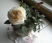 ウィットロック慶子ちゃんの薔薇庭園☆