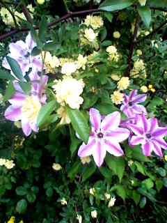 美しい!@ウィットロック庭園