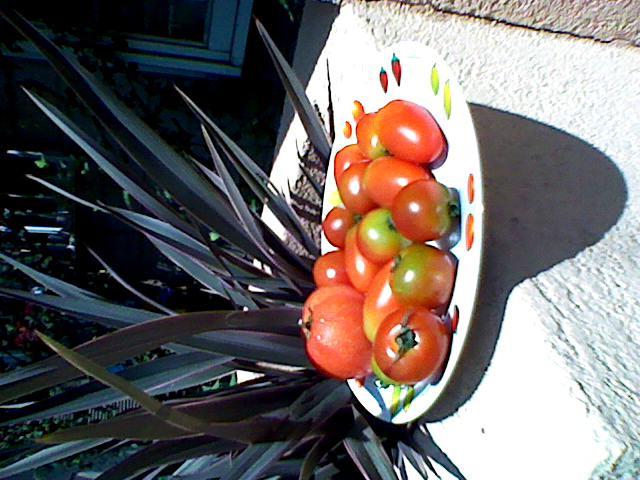 トマトを太陽にあてると。。。