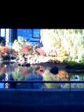 六本木 東京ミッドタウン 檜町公園