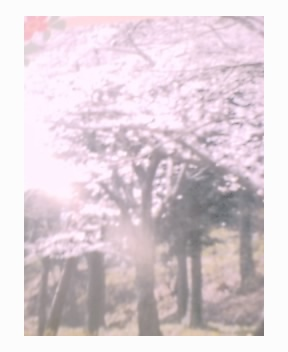 春の新入会キャンペーン第2弾